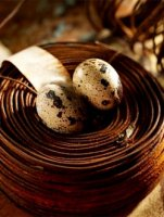 Quail eggs, the composition and properties