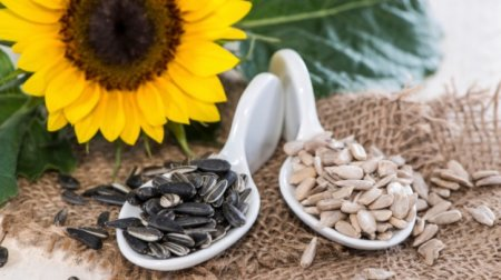 Sunflower seeds nutrition facts and health benefits