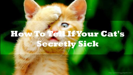 How To Tell If Your Cat's Secretly Sick