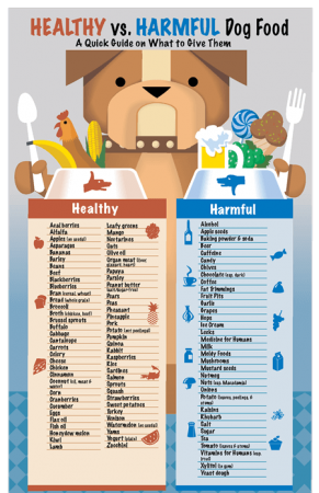 Healthy and Harmful Food for Dogs
