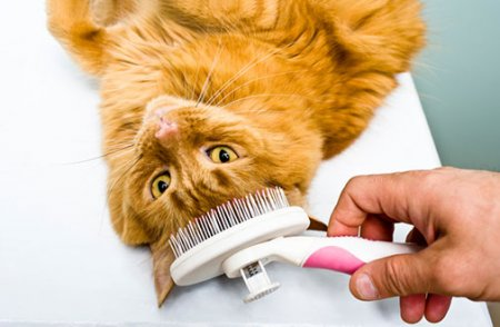 Grooming Tips to Reduce Shedding