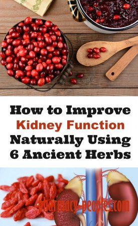 How to Improve Kidney Function Naturally Using 6 Ancient Herbs